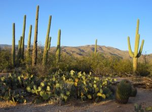saguaro-national-park-east1-coloradoguy