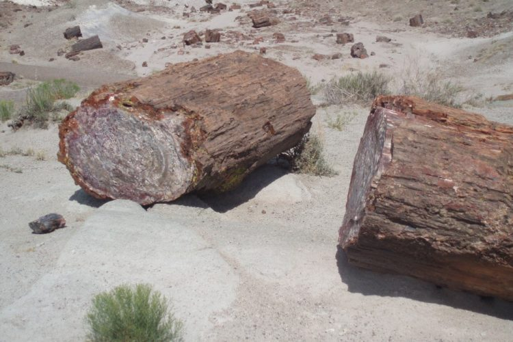 Petrified forrest State Park