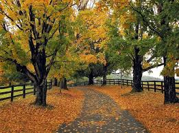 http://pixdaus.com/ridgely-farm-lane-connecticut-autumn-trees-yankee-picnik/items/view/261823/
